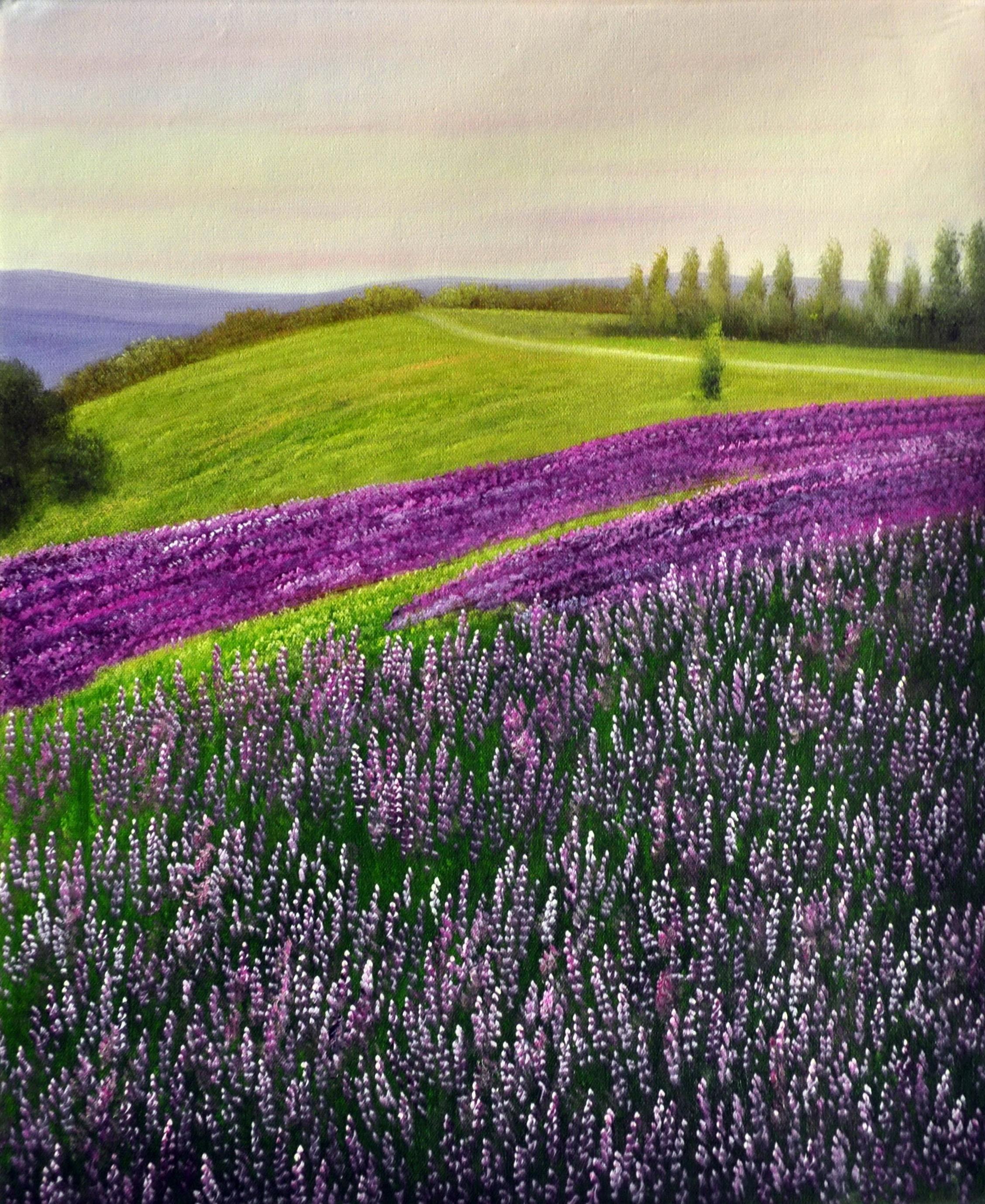 «Лавандовое поле» картина  50х60 арт.5П090