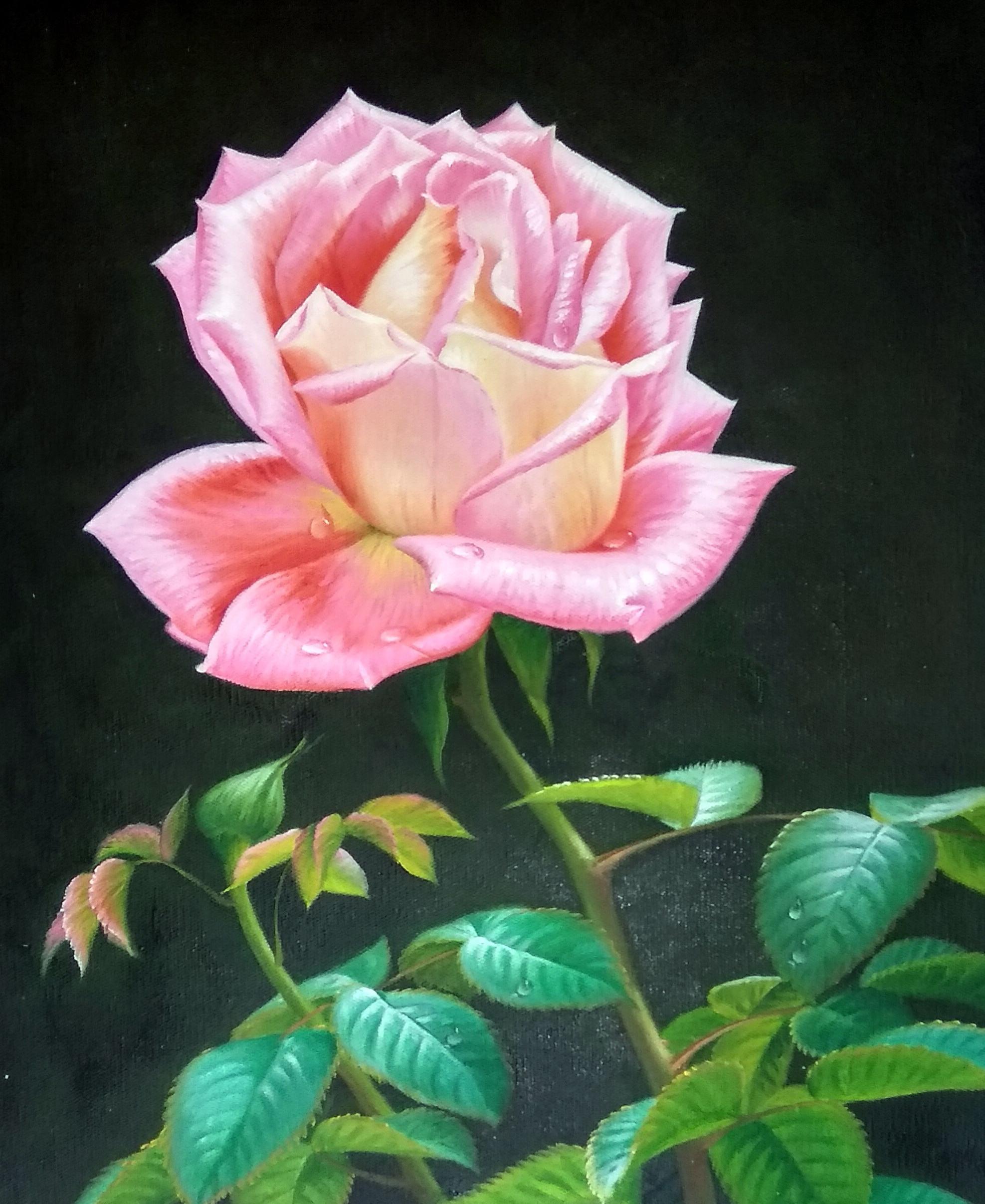 «Роза» картина 50х60 арт.5ц284