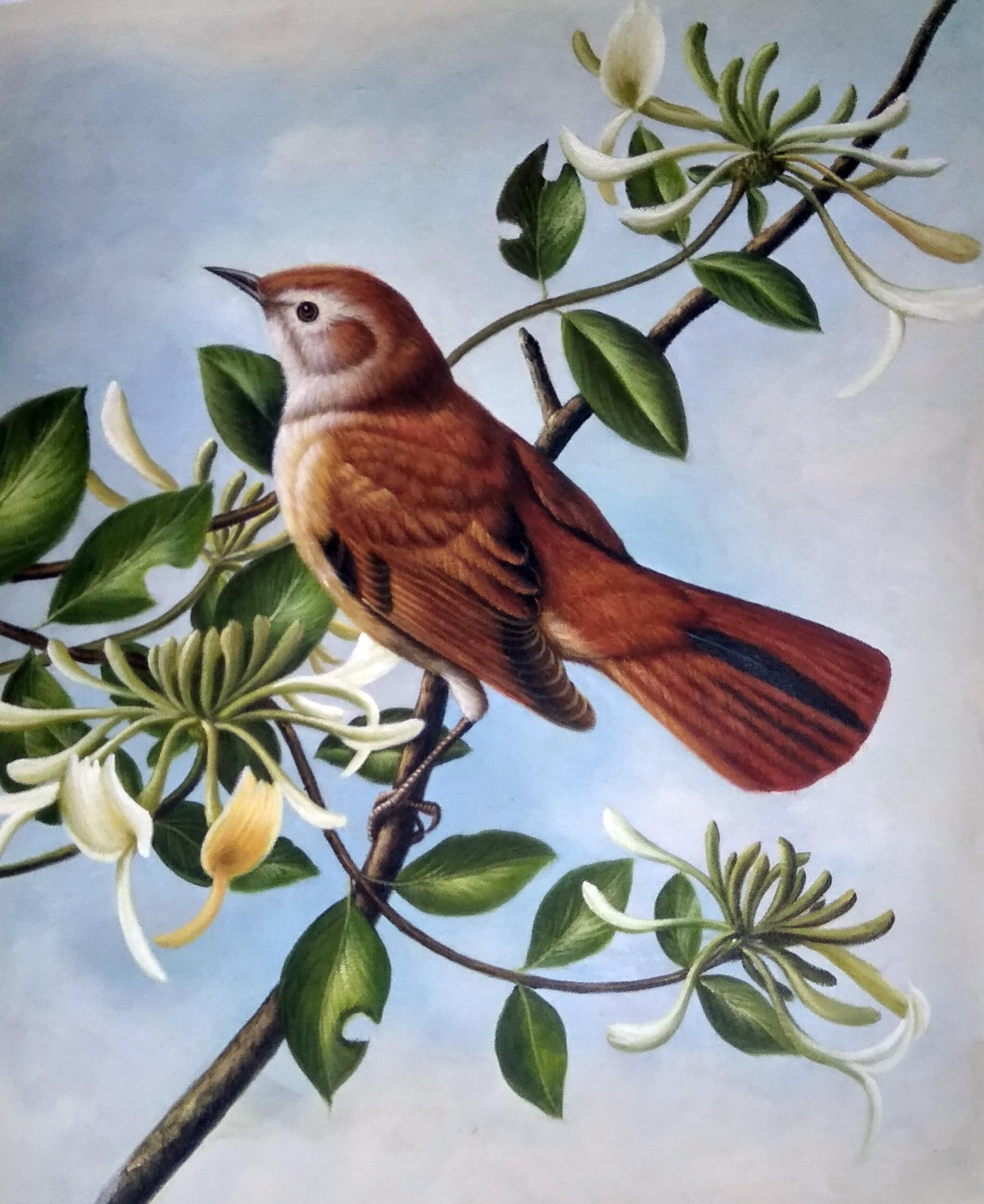 «Лесная птица» картина 50х60 арт.5а111