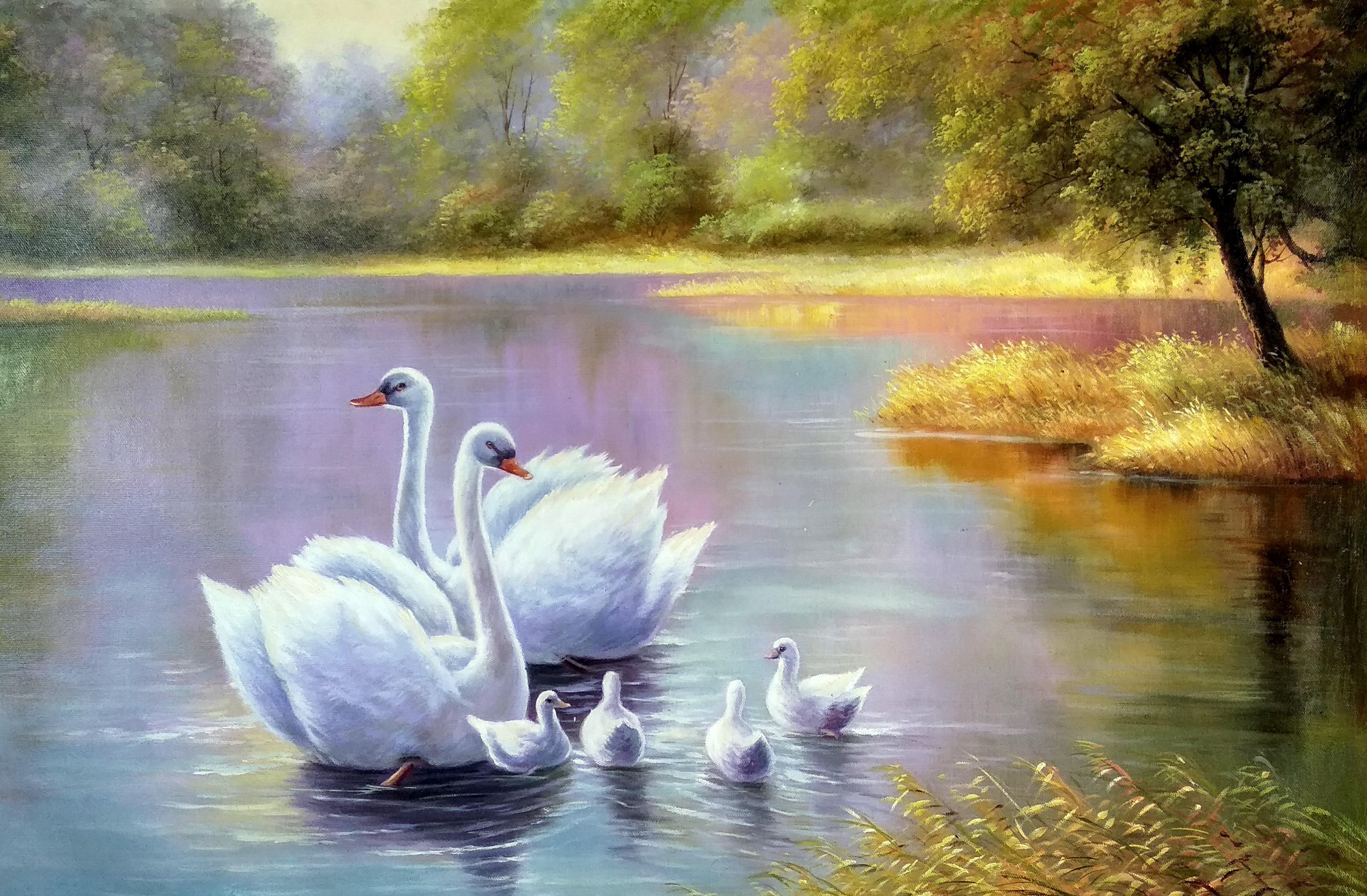 «Лебединая семья» картина 60х90 арт.9а009